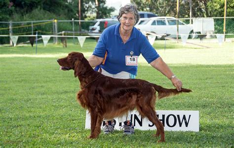 irish setter dog show barbados kennel club s october 2014 all breeds