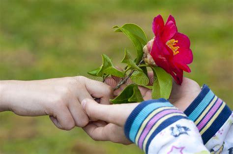 fiore simbolo amicizia simbolo di amicizia e di fotografia stock immagine