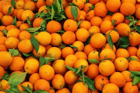 fruit pattern hd hd orange fruit pattern free desktop wallpaper