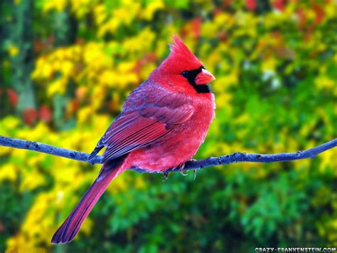 Birds Pictures | wow download colorful birds hd wallpaper