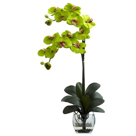 Orchid Vase Arrangement by Nearly Phalaenopsis Orchid With Vase Arrangement In Green 1323 Gr The Home Depot