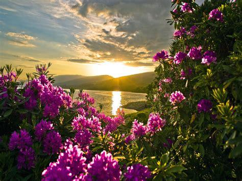 imagenes bonitas de paisajes con flores fotos de paisajes flores al atardecer