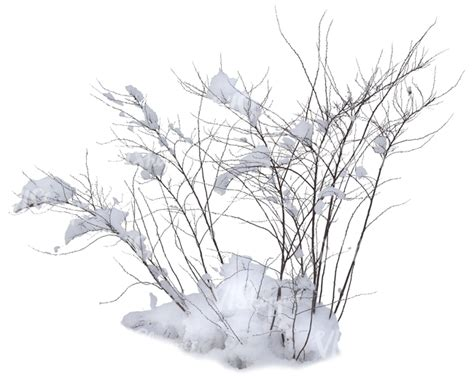 Christmas Plant Decoration Leafless Bush Covered With Snow Cut Out Trees And Plants