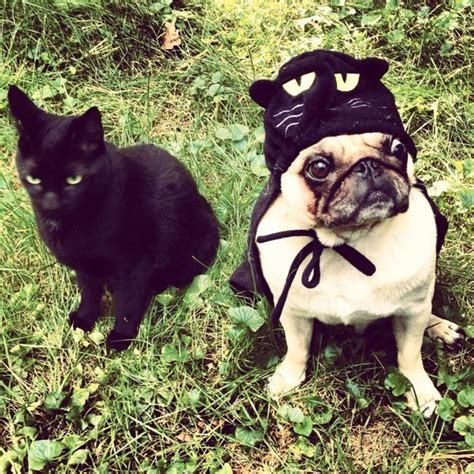 pug costume for humans 24 pug costumes that are so we can t even