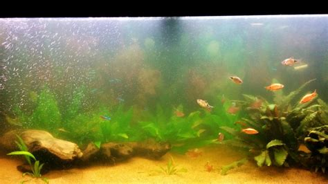 what causes a cloudy fish tank some useful information