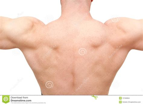 Back On With The by Back Of Muscular Builder Stock Photo Image