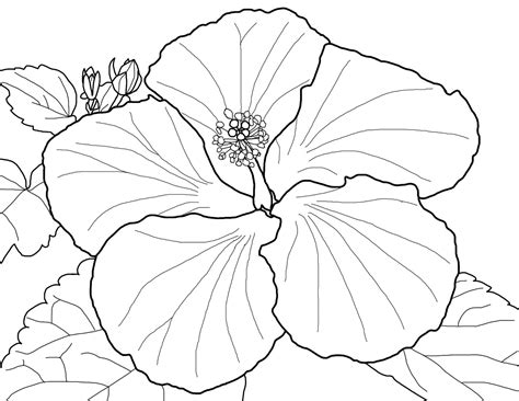 flower to color hibiscus flower coloring page coloring home