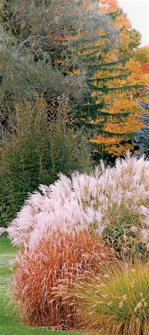 254 best ornamental grasses for sun and shade images on