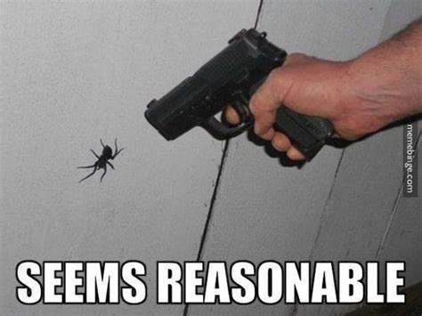 Killing Spiders Meme - best 25 spider meme ideas on pinterest funny spider