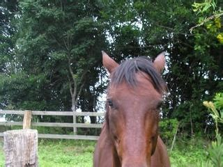 Giveaway Horses Qld - for sale give away 14 yr old male horse
