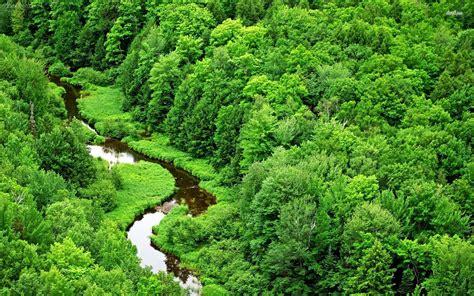 free wallpaper jungle jungle wallpapers wallpaper cave