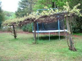 grape trellis plans so i want to build a grape trellis