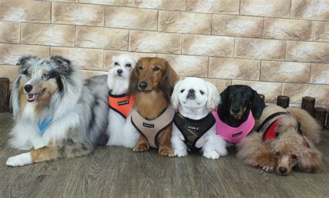 softest dogs puppia soft harness care 4 dogs on the go