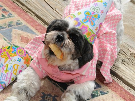 happy birthday shih tzu pictures shih tzu birthday cake ideas and designs