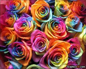 rainbow colored roses rainbow roses all colors in one