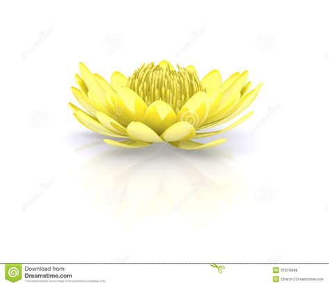 golden lotus flower water lily stock illustration image