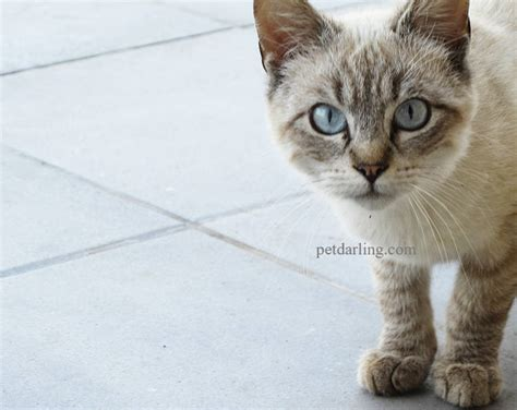 cuanto pagar por cuidar gato cuanto vive un gato