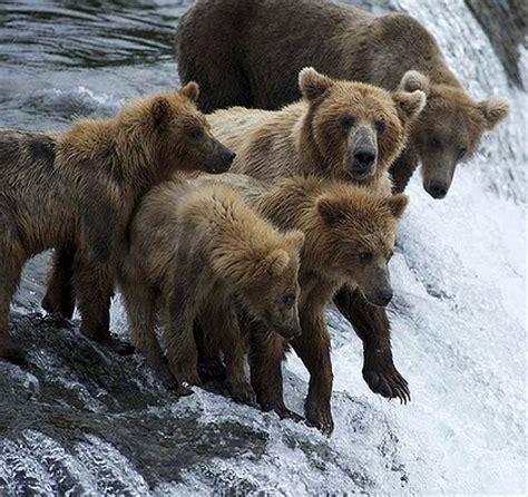 bears of fear island, sunday, july 10