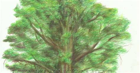 menggambar pohon  pensil warna teknik menggambar