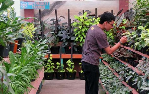Jual Hidrogel Murah Di Surabaya mir yuk ke venita supermarket tanaman wisata bandung