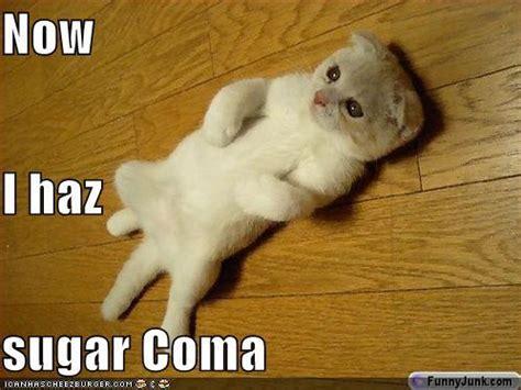 Sugar Meme - ohh sugar livin life in louie