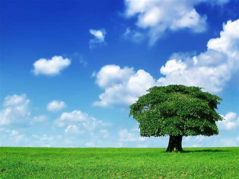 imagenes naturales simples wallpapers tree in field