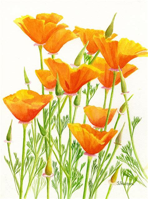 california poppies painting by sharon freeman