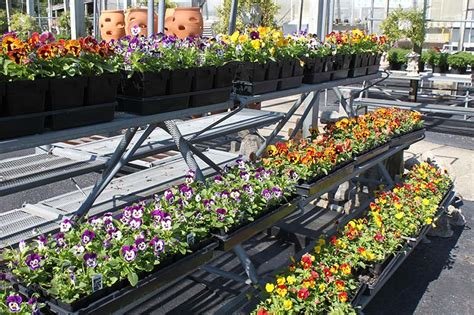 Dayton Garden Center by Summer Gardening Dayton Garden Center