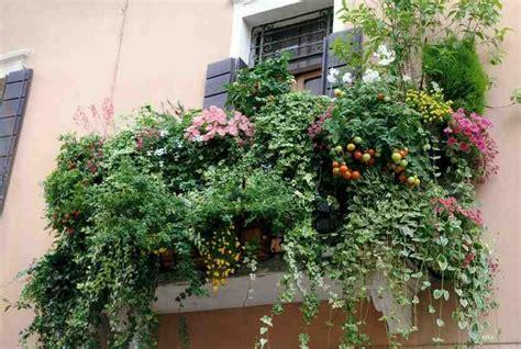 alberelli da terrazzo piante da balcone e da terrazzo i nostri consigli