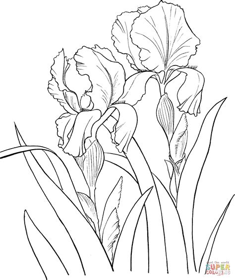 coloring pictures of iris flowers 301 moved permanently