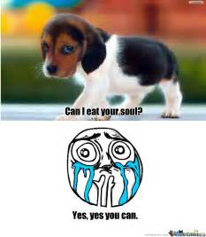 Cutest Memes - cute puppy by mkaism492 meme center