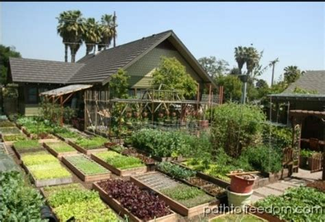 homestead vegetable gardening acre farm gardening