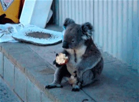 Apple Koala by Gif Koala An Apple Gifrific