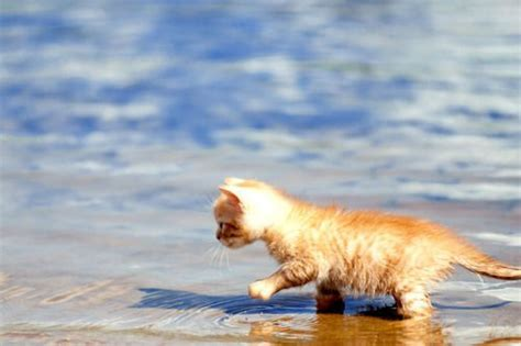 Sea Of Cats sea living kitten at the by