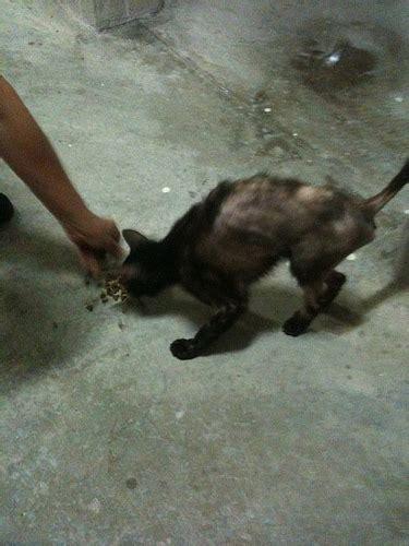 back legs weak cats weak hind legs