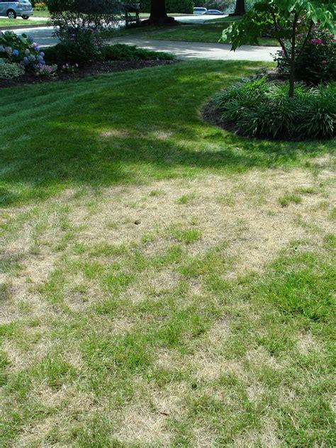 Fix Garden by Fixing A Dead Lawn Garden Housecalls