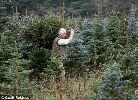top 28 vincent christmas tree farm christmas tree farm