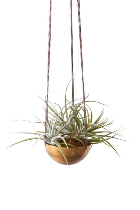 Metal Hanging Planter by How To Display Air Plants In Hanging Containers