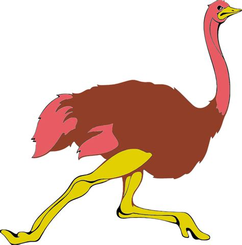 ostrich clipart free vector graphic animal bird flightless ostrich