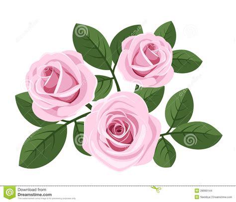 imagenes tres rosas tres rosas rosadas con las hojas en blanco imagenes de