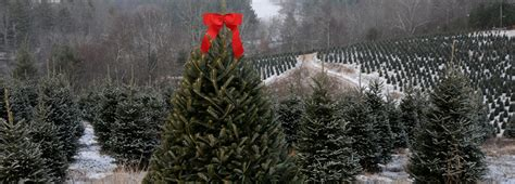 real or fake christmas trees what s better for the