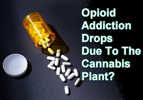 Opiate Abuse Grogus Detox by Opioid Addiction Drops Due To The Cannabis Plant