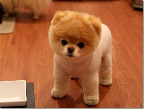 a real puppy this is a real quot boo the headed quot things cutest