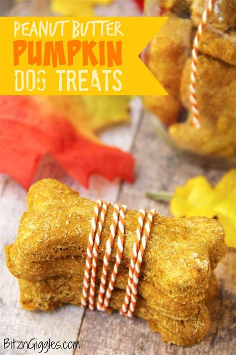 pumpkin treats for dogs 1000 ideas about pumpkin treats on treats cookies and