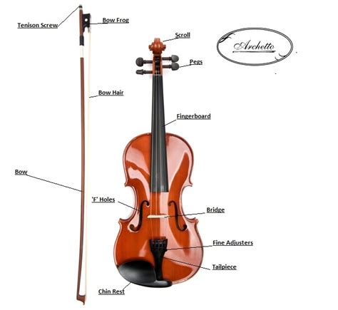 labelled diagram of a violin what are the parts of a violin pictures to pin on