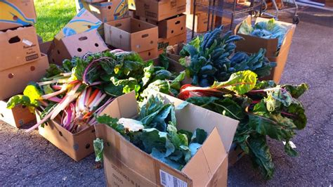 Green Harvest Food Pantry by Donate Your Organic Garden Vegetable Harvest To A Food Pantry Coronado