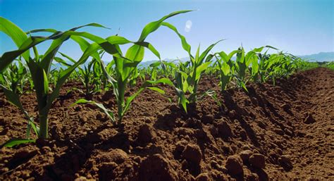 imagenes satelitales para agricultura farmlandgrab org agricultura digital para alimentar al mundo