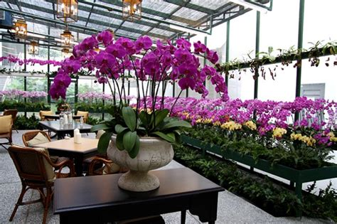 orchid room the world s catalog of ideas