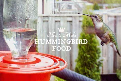 best 25 hummingbird sugar water ideas on pinterest