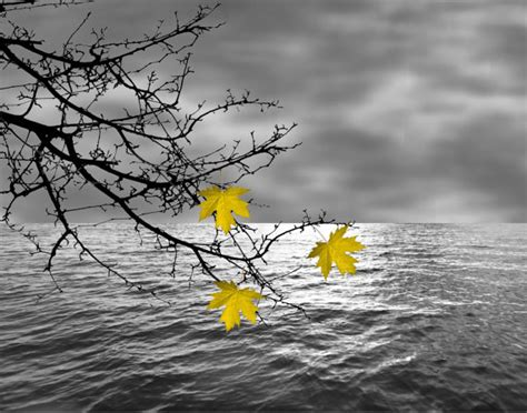 black white yellow leaves on tree branch by